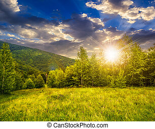 meadow near the forest in mountains at sunset