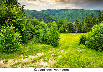 meadow near the forest in mountains - meadow with small...