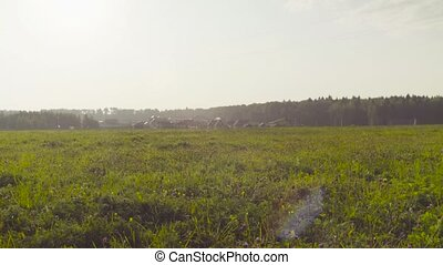 Meadow near the village. Early summer morning - Crane shot...