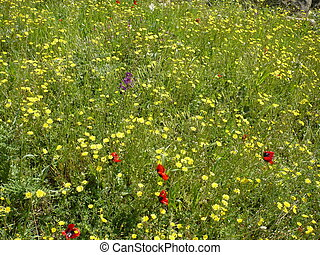 Meadow of different flowers close-up