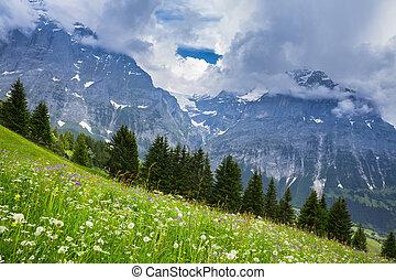 Green Meadow in Swiss alp, Switzerland Interlaken - Lauterbrunnen