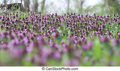 meadow of spring flowers at the edge of the forest, change...