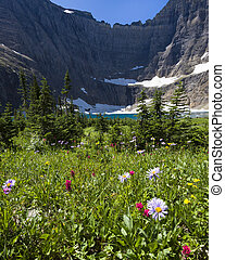 Meadow of Wildflowers at Iceberg Lake, Montana