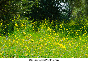 Meadow of yellow flowers with gossamer. Beauty nature...