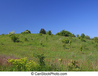 meadow on a hill