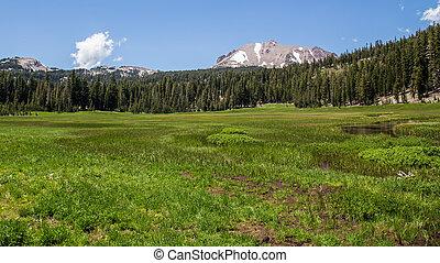 Meadow on Lassen