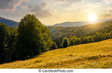 meadow on the forested hill in mountain at sunset