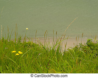 meadow on the sand beach