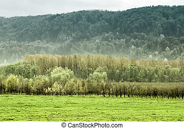 Meadow, orchard and forest