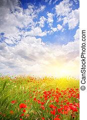 meadow., papavero, nature., composizione