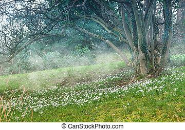 meadow., paysage., perce-neige, printemps