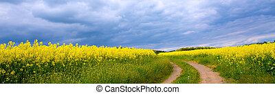 meadow., por, camino