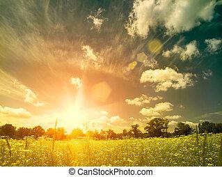 meadow., sommar, naturlig skönhet, över, bakgrunder, lysande, solnedgång, vild, kamomill, blomningen