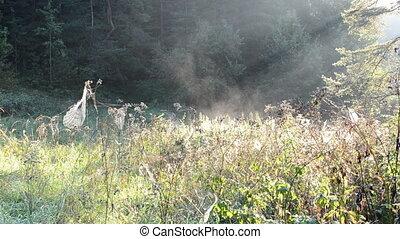 meadow spider web fog - spiderweb spider web on meadow grass...