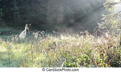 meadow spider web fog