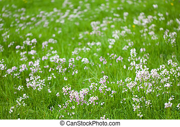 meadow spring
