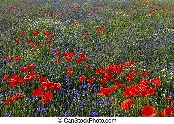 Meadow - Spring meadow
