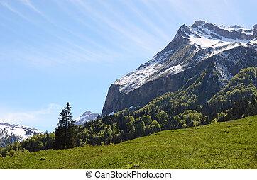 meadow., szwajcaria, alpejski