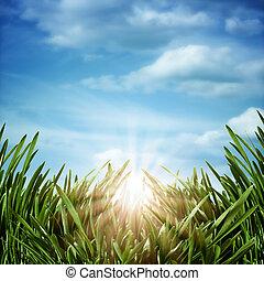 meadow., tła, abstrakcyjny, kasownik, wschód słońca