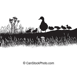 Meadow to ducks