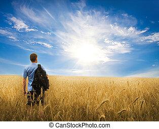 meadow., trigo, amarillo, hombre