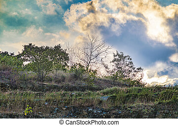 Meadow Tropical Landscape Scene, Guayaquil, Ecuador - Meadow...