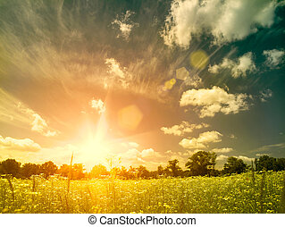 meadow., verão, beleza natural, sobre, fundos, luminoso, pôr do sol, selvagem, chamomile, flores