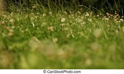 Meadow - video footage of a green meadow in summer