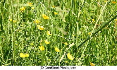 Meadow - video of wild flowers in the meadow