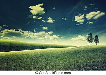 meadow., wieczorny, naturalne piękno, abstrakcyjny krajobraz