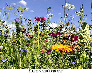 meadow with a lot of colorful flowers