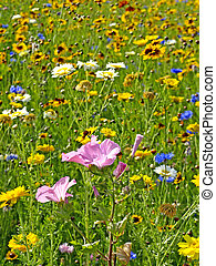 meadow with a lot of flowers