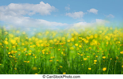 Meadow with buttercup