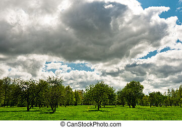 Meadow with cloudscape