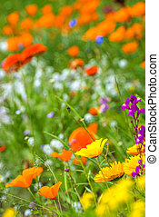 Meadow with colorful flowers
