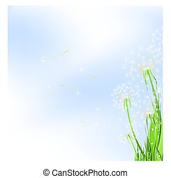 dandelions - meadow with dandelions and blue sky, copyspace ...