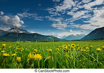 meadow with dandelions and tyrol mountains at blue sky