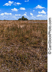 Meadow with dry grass