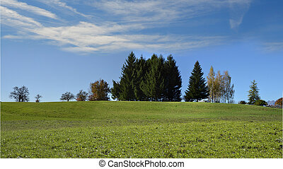 Meadow with grass and blue sky in the background