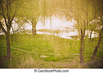 meadow with grass and trees near the water