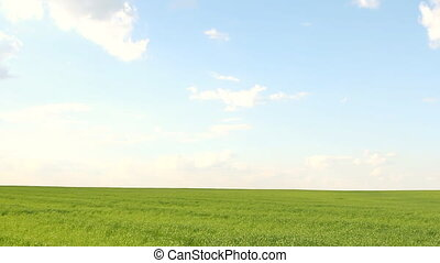 Meadow with green grass and blue sk