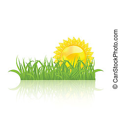 Meadow with green grass and yellow sun