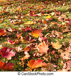 meadow with leaves