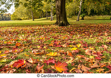 meadow with leaves in autumn