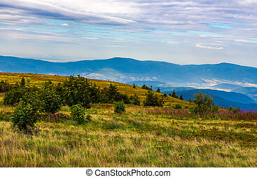 meadow with purple flowers in mountains - grassy meadow with...