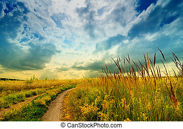 Meadow with road