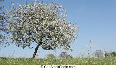 meadow with spring tree