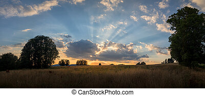 meadow with trees at sunset - summer evening in the countryside