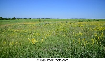 meadow with wild herbs European part of Russia - meadow with...