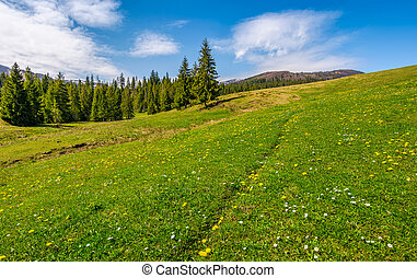 meadow with wildflowers near forest
